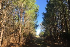 Camden Recreational Tract and Long-Term Timber Investment in Kershaw, SC (27 of 50)