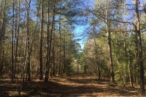 Camden Recreational Tract and Long-Term Timber Investment in Kershaw, SC (11 of 50)