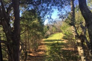 Camden Recreational Tract and Long-Term Timber Investment in Kershaw, SC (43 of 50)