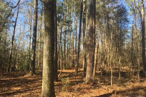Camden Recreational Tract and Long-Term Timber Investment in Kershaw, SC (28 of 50)