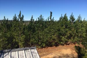 Camden Recreational Tract and Long-Term Timber Investment in Kershaw, SC (33 of 50)