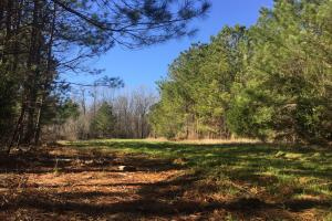 Camden Recreational Tract and Long-Term Timber Investment in Kershaw, SC (7 of 50)