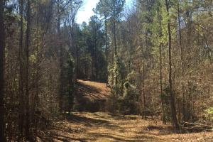 Camden Recreational Tract and Long-Term Timber Investment in Kershaw, SC (35 of 50)