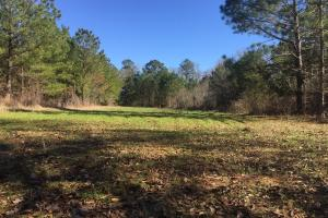 Camden Recreational Tract and Long-Term Timber Investment in Kershaw, SC (46 of 50)