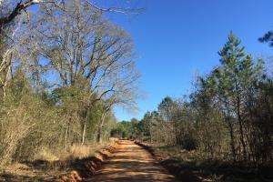 Camden Recreational Tract and Long-Term Timber Investment in Kershaw, SC (12 of 50)