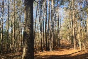 Camden Recreational Tract and Long-Term Timber Investment in Kershaw, SC (45 of 50)