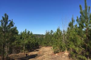 Camden Recreational Tract and Long-Term Timber Investment in Kershaw, SC (16 of 50)