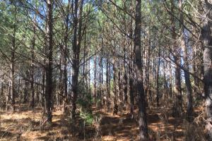 Camden Recreational Tract and Long-Term Timber Investment in Kershaw, SC (38 of 50)