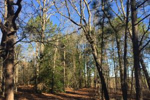 Cassatt Hunting and Recreation with Multiple Homesites in Kershaw, SC (13 of 14)