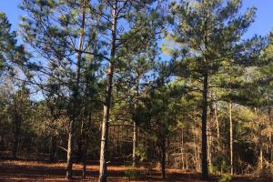 Cassatt Hunting and Recreation with Multiple Homesites in Kershaw, SC (2 of 14)