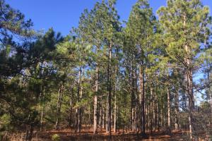 Cassatt Hunting and Recreation with Multiple Homesites in Kershaw, SC (12 of 14)
