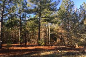 Cassatt Hunting and Recreation with Multiple Homesites in Kershaw, SC (7 of 14)