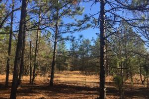 Cassatt Hunting and Recreation with Multiple Homesites in Kershaw, SC (11 of 14)