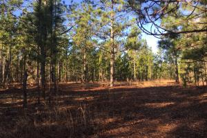 Cassatt Hunting and Recreation with Multiple Homesites