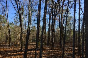 Cassatt Hunting and Recreation with Multiple Homesites in Kershaw, SC (3 of 14)