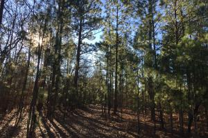 Cassatt Hunting and Recreation with Multiple Homesites in Kershaw, SC (10 of 14)