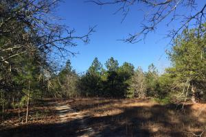 Cassatt Hunting and Recreation with Multiple Homesites in Kershaw, SC (8 of 14)