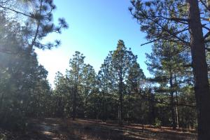 Cassatt Hunting and Recreation with Multiple Homesites in Kershaw, SC (6 of 14)