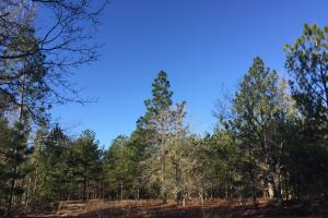 Cassatt Hunting and Recreation with Multiple Homesites in Kershaw, SC (9 of 14)