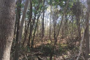 4.57 Acre Hwy 601 Commercial Lot in Kershaw, SC (4 of 7)