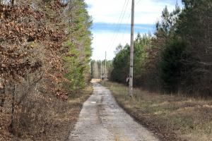County Line Road Investment and Hunting Tract in Colbert, AL (4 of 8)