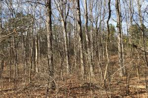 County Line Road Investment and Hunting Tract in Colbert, AL (2 of 8)