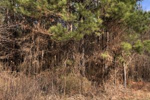 County Line Road Investment and Hunting Tract in Colbert, AL (3 of 8)