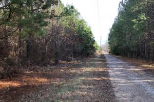 County Line Road Investment and Hunting Tract in Colbert, AL (8 of 8)