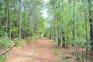 Hwy 327: Commercial & Recreational Land - Florence County SC