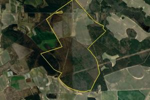 Edinburgh Irrigated Farmland and Timberland in Hoke, NC (2 of 19)