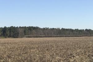 Edinburgh Irrigated Farmland and Timberland in Hoke, NC (9 of 19)