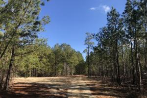 Bladen County Hunting and Timberland - Bladen County, NC