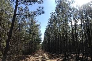 Bladen County Hunting and Timberland - Bladen County NC
