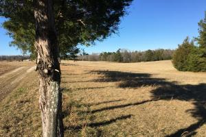 Beautiful Home Overlooking Pastures & Ponds in Abbeville, SC (18 of 74)