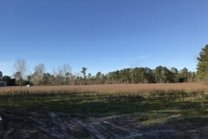 McDaniels Farms, LLC Farm Land/Deer Hunting in Clarendon County, SC (5 of 7)