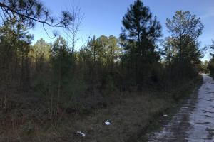 McDaniels Farms, LLC Farm Land/Deer Hunting in Clarendon County, SC (7 of 7)