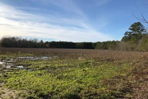 McDaniels Farms, LLC Farm Land/Deer Hunting - Clarendon County SC