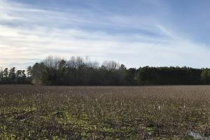 McDaniels Farms, LLC Farm Land/Deer Hunting in Clarendon County, SC (6 of 7)