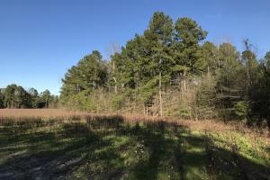 McDaniels Farms, LLC Farm Land/Deer Hunting in Clarendon County, SC (4 of 7)