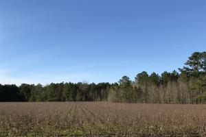 McDaniels Farms, LLC Farm Land/Deer Hunting in Clarendon County, SC (3 of 7)