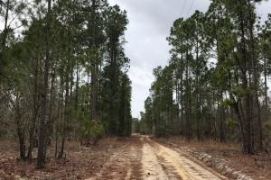 Cape Fear River Homesite in Bladen, NC (2 of 15)