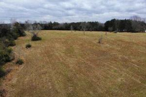 Madison 4 acre Homesite in Madison, MS (2 of 4)