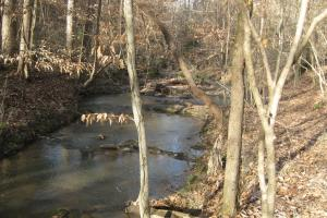Peak Timber, Hunting, Homesite - Newberry County SC
