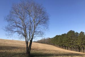 Loudon County Farm/Residential Development Tract in Loudon, TN (4 of 34)