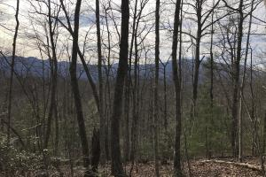 Pittman Center Mountain Property - Sevier County TN