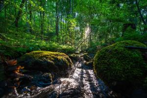 Multiple streams and creeks, Hidden Falls Meadow of Pisgah National Forest (2 of 82)