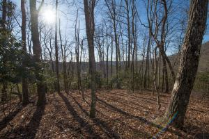 Upper areas of land with views,  Hidden Falls Meadow, Balsam Grove (67 of 82)