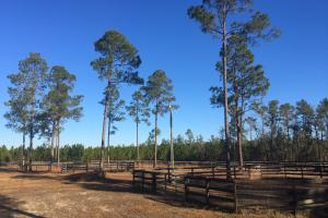 Evergreen Training Center and Equestrian Complex in Kershaw, SC (30 of 96)