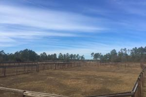 Evergreen Training Center and Equestrian Complex in Kershaw, SC (12 of 96)