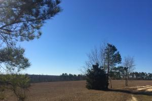Evergreen Training Center and Equestrian Complex in Kershaw, SC (78 of 96)